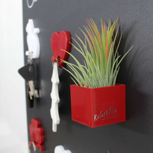 MAGNETIC CUBE 3,5 CM AND TILLANDSIA...