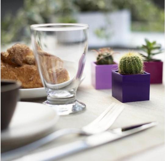 Colazione su un tavolo decorato da piccole piante grasse all'interno di cubi magnetici KalaMitica