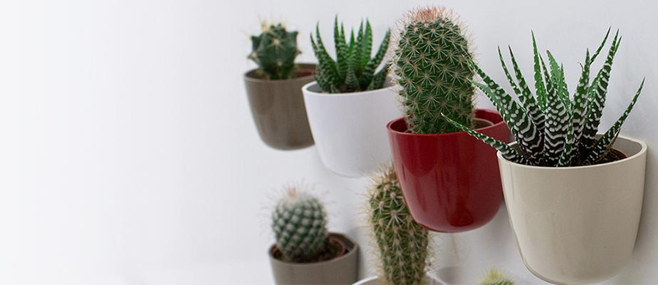 Plantas suculentas de interior, composiciones y soluciones originales de decoracion
