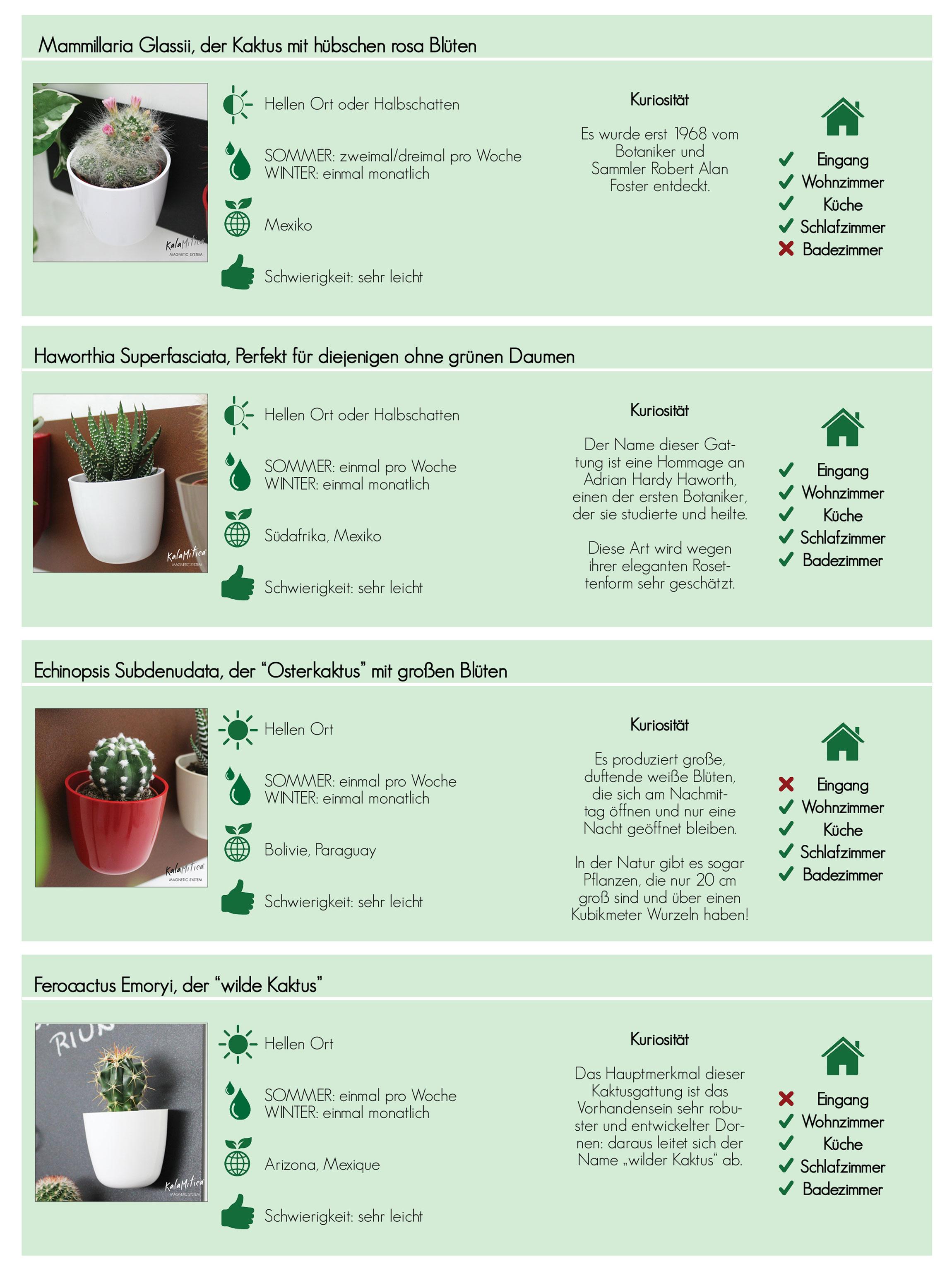 KalaMitica-Sukkulenten: Tipps-Tabelle für häusliche Pflege, vollständige Anleitung