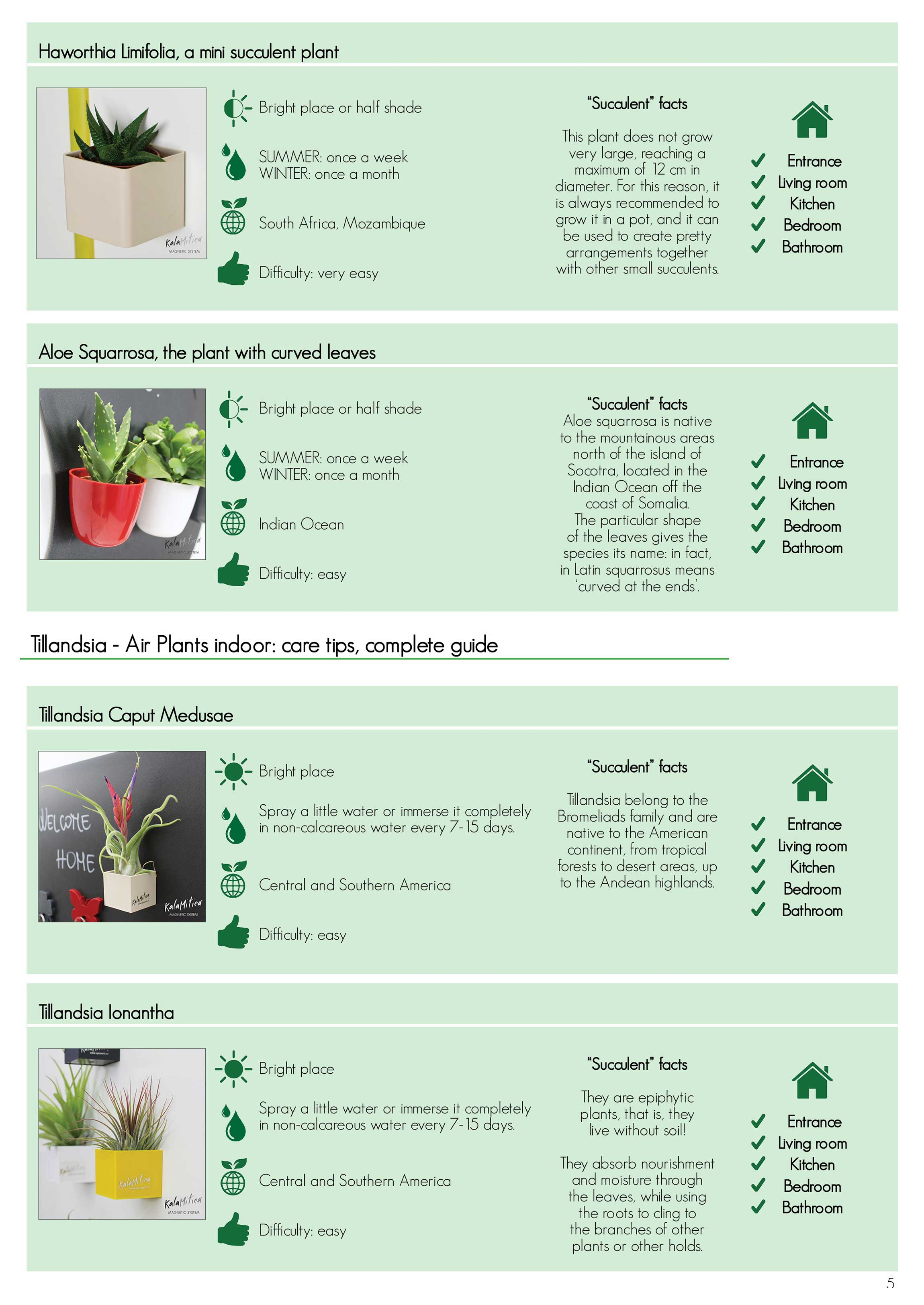 KalaMitica succulents: care tips, complete guide