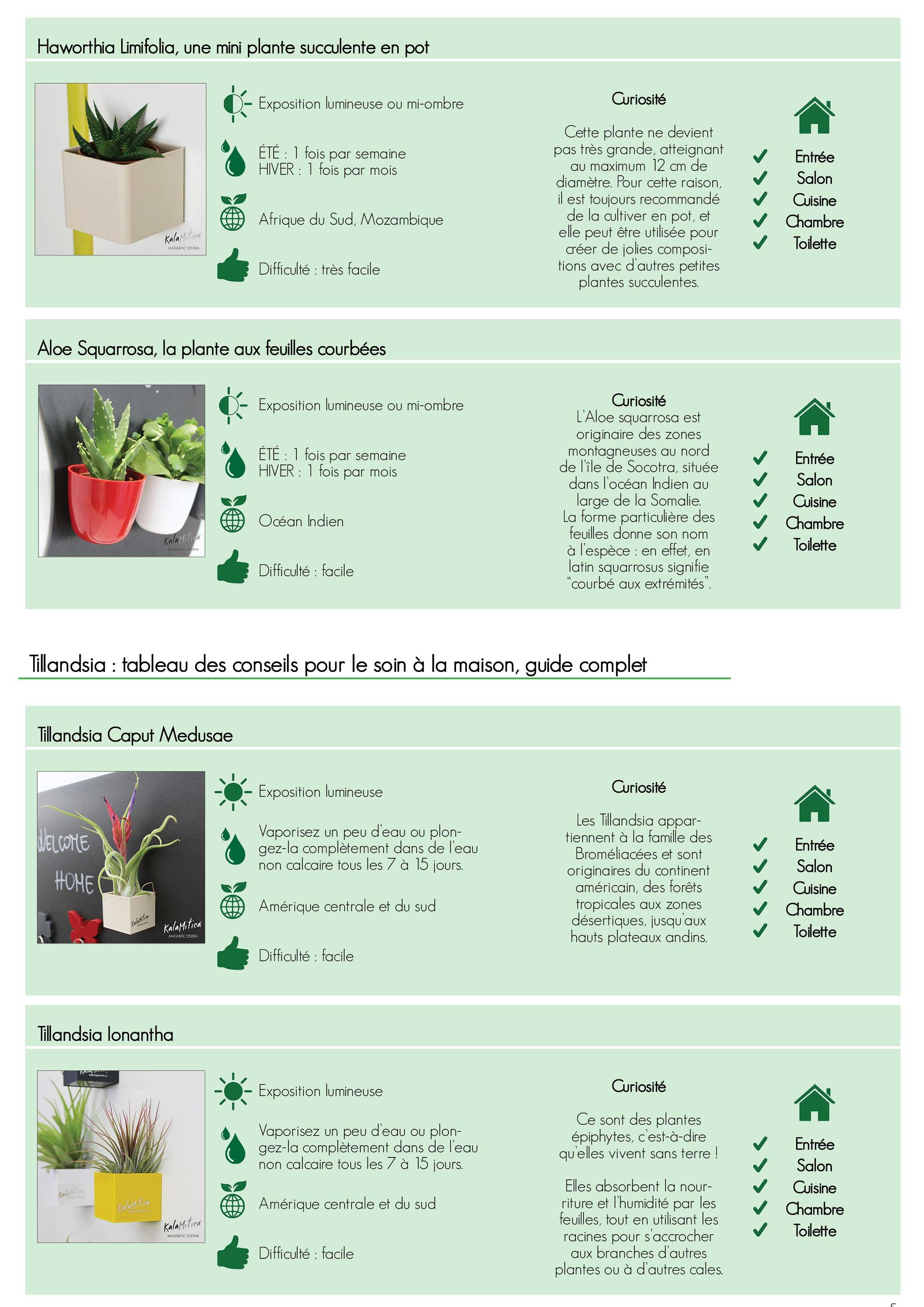 Plantes succulentes KalaMitica: tableau des conseils d'entretien, guide complet
