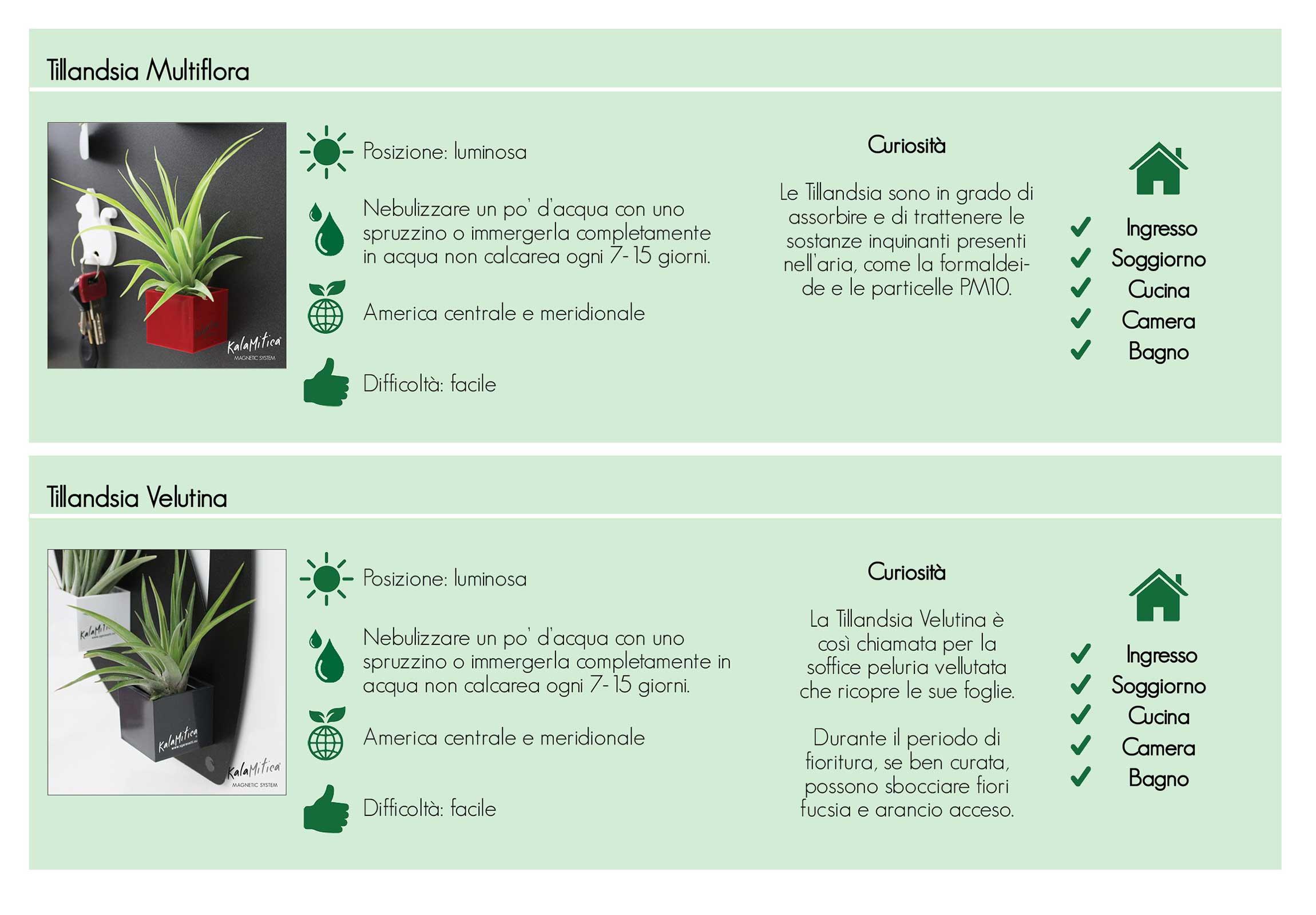 tabella completa per la cura e il mantenimento delle tillandsia